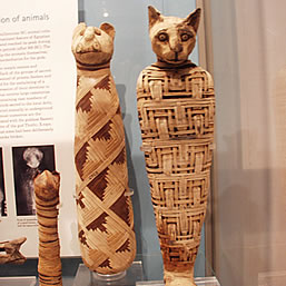 mummified cat